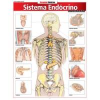 Resumao - Sistema Endocrino Avancado