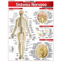 Resumao - Sistema Nervoso Avancado
