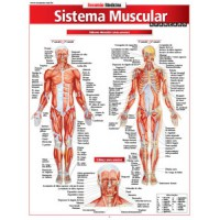 Resumao - Sistema Muscular Avancado