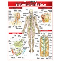 Resumao - Sistema Linfatico