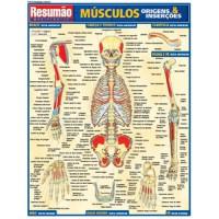 Resumao - Musculos: Origens & Insercoes