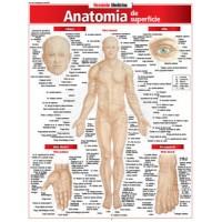 Resumao - Anatomia De Superficie